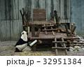 中国 四川 パンダ基地 パンダ 32951384