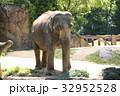 食事 動物園 動物の写真 32952528