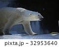 天王寺動物園 動物 ホッキョクグマの写真 32953640