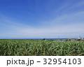 サトウキビ畑 青空 沖縄の写真 32954103