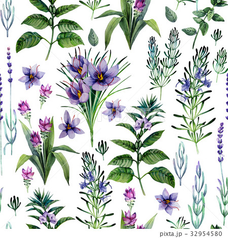 Watercolor herbs and spices 32954580