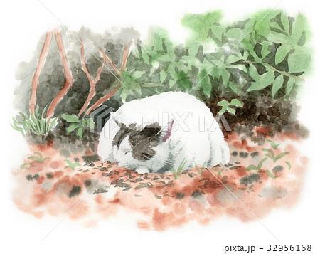 落ち葉の上で眠る猫 32956168