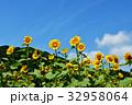 青空 夏 向日葵の写真 32958064
