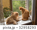 Dog and the cat on the window 32958293