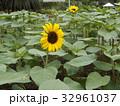 色々な花の咲くヒマワリモネパレットの黄色い花 32961037