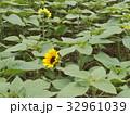色々な花の咲くヒマワリモネパレットの黄色い花 32961039