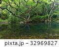 森林 林 森の写真 32969827