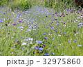 花の小道 32975860
