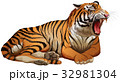 Wild tiger roaring on white background 32981304