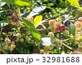 ブルーベリー 実 果物の写真 32981688