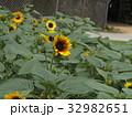色々な花の咲くヒマワリモネパレットの黄色い花 32982651