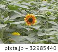 色々な花の咲くヒマワリモネパレットの黄色い花 32985440