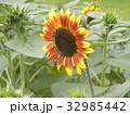 色々な花の咲くヒマワリモネパレットの黄色い花 32985442