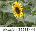 色々な花の咲くヒマワリモネパレットの黄色い花 32985444