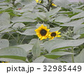 色々な花の咲くヒマワリモネパレットの黄色い花 32985449