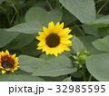 色々な花の咲くヒマワリモネパレットの黄色い花 32985595