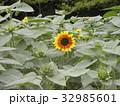 色々な花の咲くヒマワリモネパレットの黄色い花 32985601