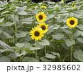 色々な花の咲くヒマワリモネパレットの黄色い花 32985602