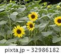 色々な花の咲くヒマワリモネパレットの黄色い花 32986182