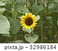 色々な花の咲くヒマワリモネパレットの黄色い花 32986184