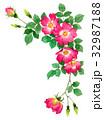 赤の一重咲きバラの上部フレーム素材 32987188