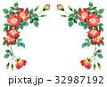 赤の一重咲きバラの上部フレーム素材 32987192