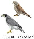 鳥7 32988187