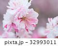 花桃の花 32993011