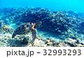 沖縄 渡嘉敷島の渡嘉志久ビーチ アオウミガメの水中写真 32993293