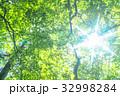 新緑 緑 エコイメージの写真 32998284