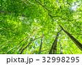 新緑 緑 エコイメージの写真 32998295