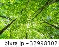 新緑 緑 エコイメージの写真 32998302