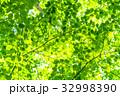 新緑エコイメージ 32998390