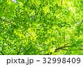 新緑エコイメージ 32998409
