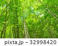 新緑 初夏 若葉の写真 32998420