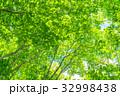 新緑 初夏 若葉の写真 32998438