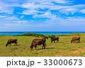 牛 石垣島 海  33000673