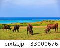 牛 石垣島 海  33000676