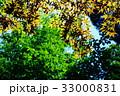 新緑の葉っぱ 33000831