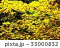 新緑の葉っぱ 33000832
