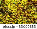 新緑の葉っぱ 33000833