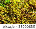 新緑の葉っぱ 33000835