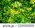 もみじの葉っぱ 33000900