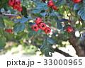 木の実 33000965
