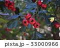 木の実 33000966