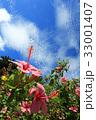 ハイビスカス 青空 花の写真 33001407