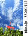ハイビスカス 青空 花の写真 33001412