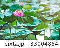 花 お花 フラワーの写真 33004884