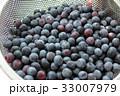 ブルーベリー 収穫 フルーツの写真 33007979