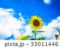 ひまわり 夏 青空の写真 33011446